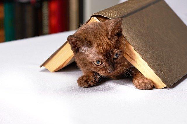 本に隠れるネコの画像
