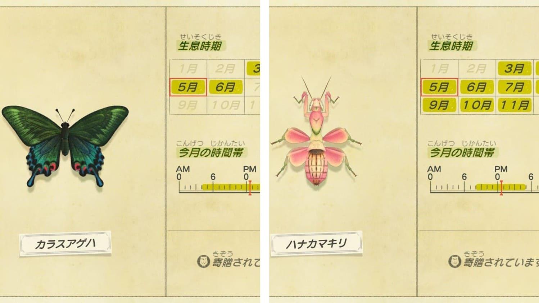 捕まえるべき虫の画像