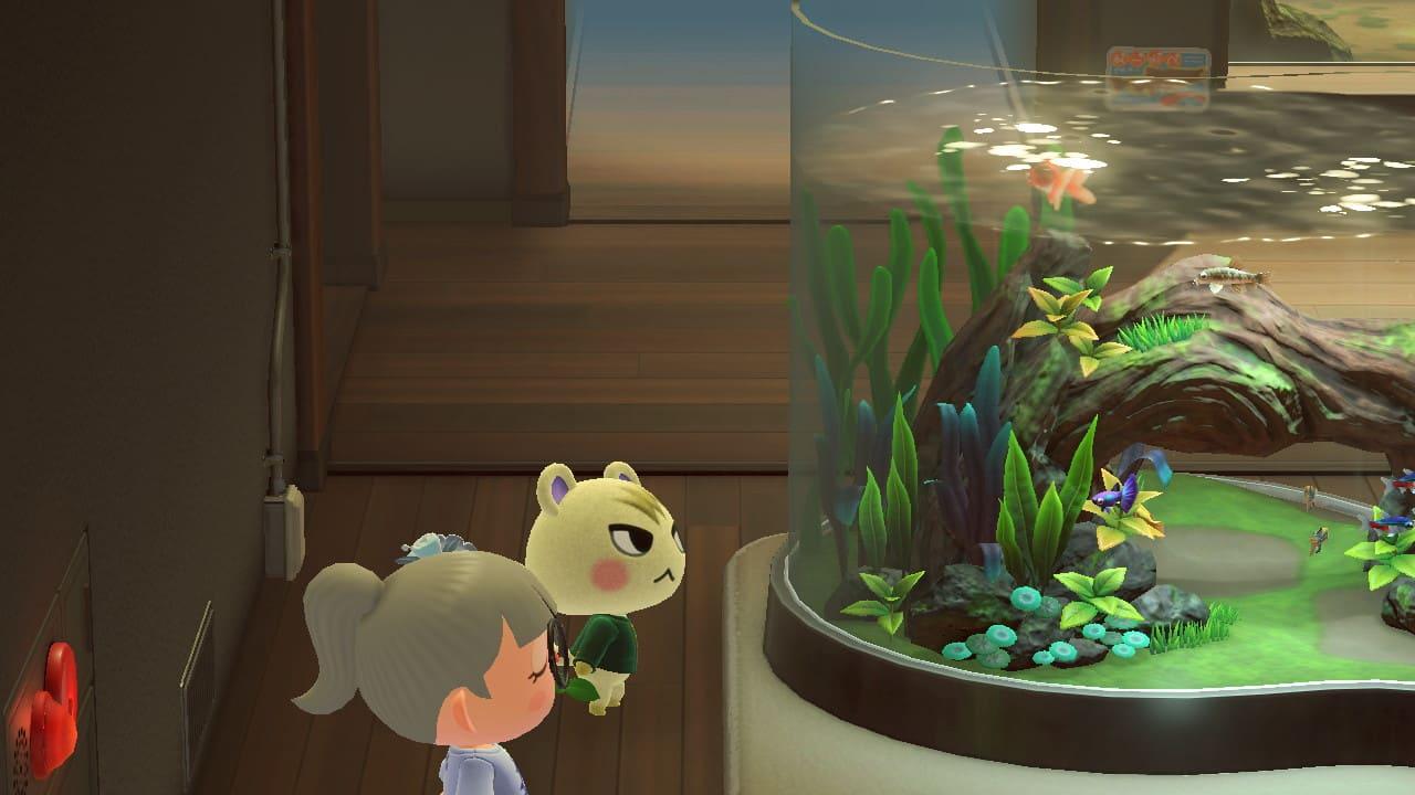 水槽を眺めるジュンの画像