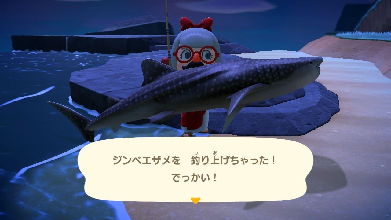 ジンベエザメを釣った画像