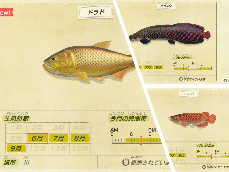高値で売れる魚の画像