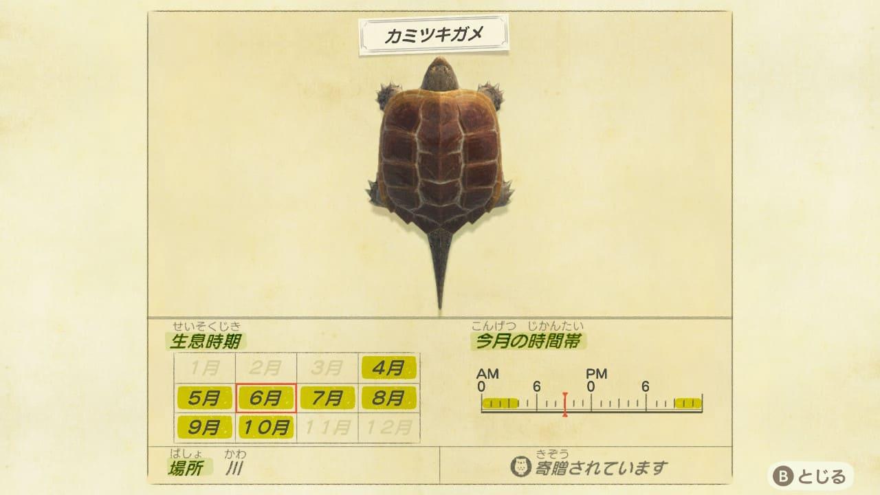 カミツキガメの画像