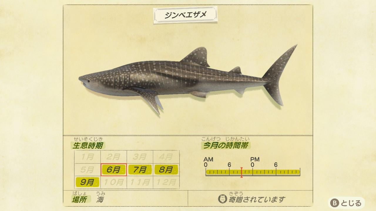 ジンベエザメの画像